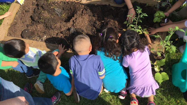 Lakeview students work with parents and staff to start their garden. /Photo: Courtesy ZSC6