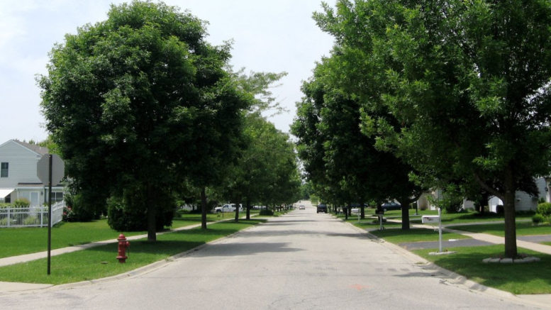 Consider our 50/50 Parkway Tree program. /Photo: Courtesy VG