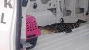 Fue llevado al Lake Forest Wildlife Discovery Center. /Foto: City of Waukegan y J. Contreras